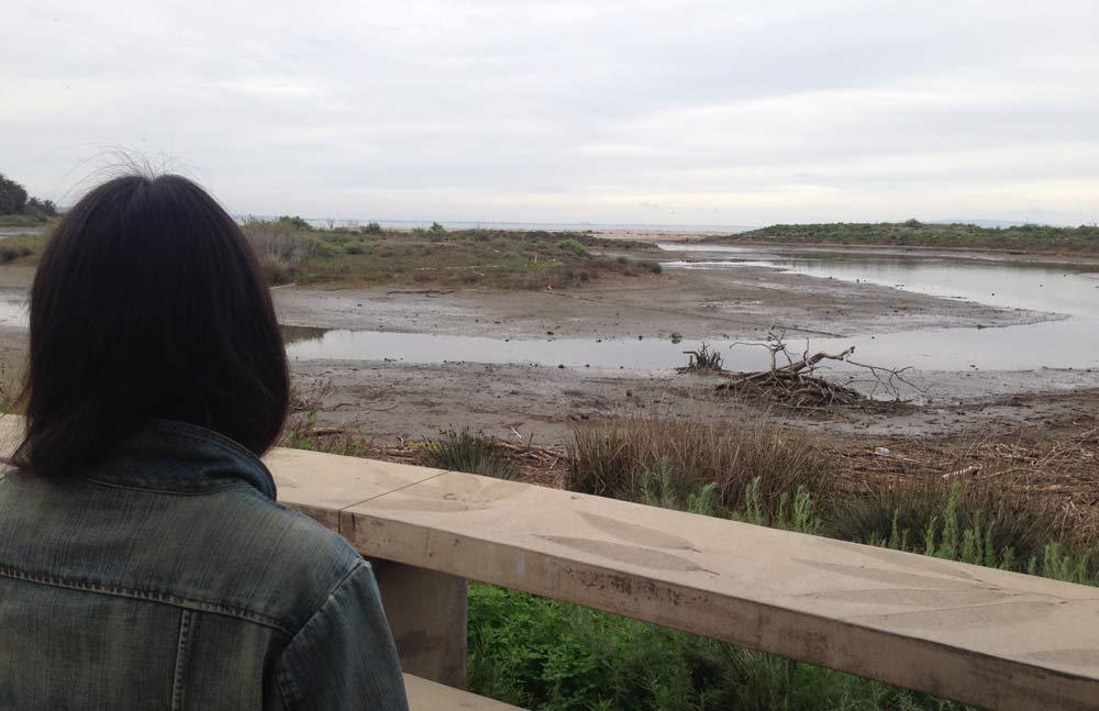 マリブのラグーン、ほとんど沼です