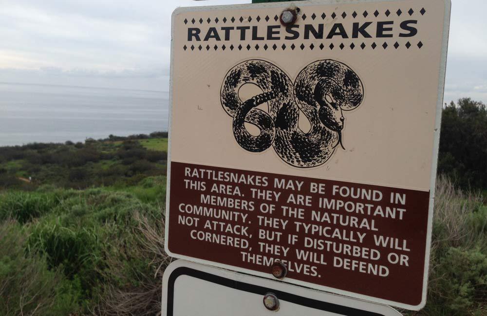 ラトルスネーク、ガラガラヘビ出没注意